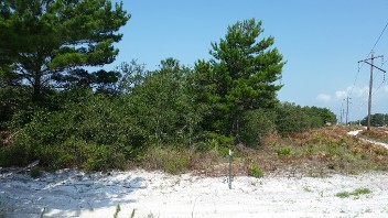 Land Clearing, forestry mulching, bush hogging, Panama City, Florida
